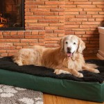 Pet Furniture For Dogs